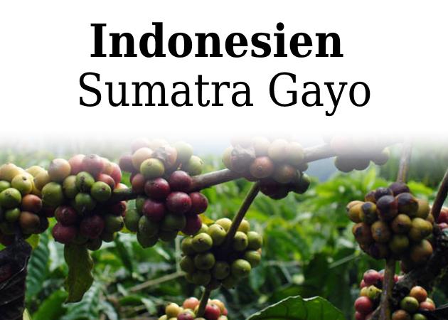 Råkaffe, Sumatra Gayo FTO, 1 kg
